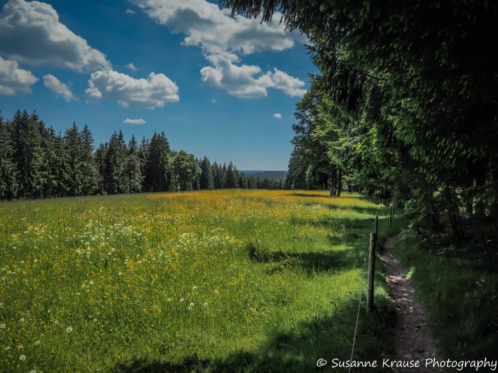 Schwarzwald Foto der Pfingst-Wanderung 2014